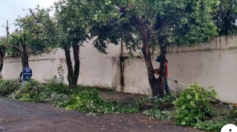 WhatsApp Image 2019 04 24 at 22.57.05 800x445 - Funcionários da Prefeitura são flagrados realizando poda drástica