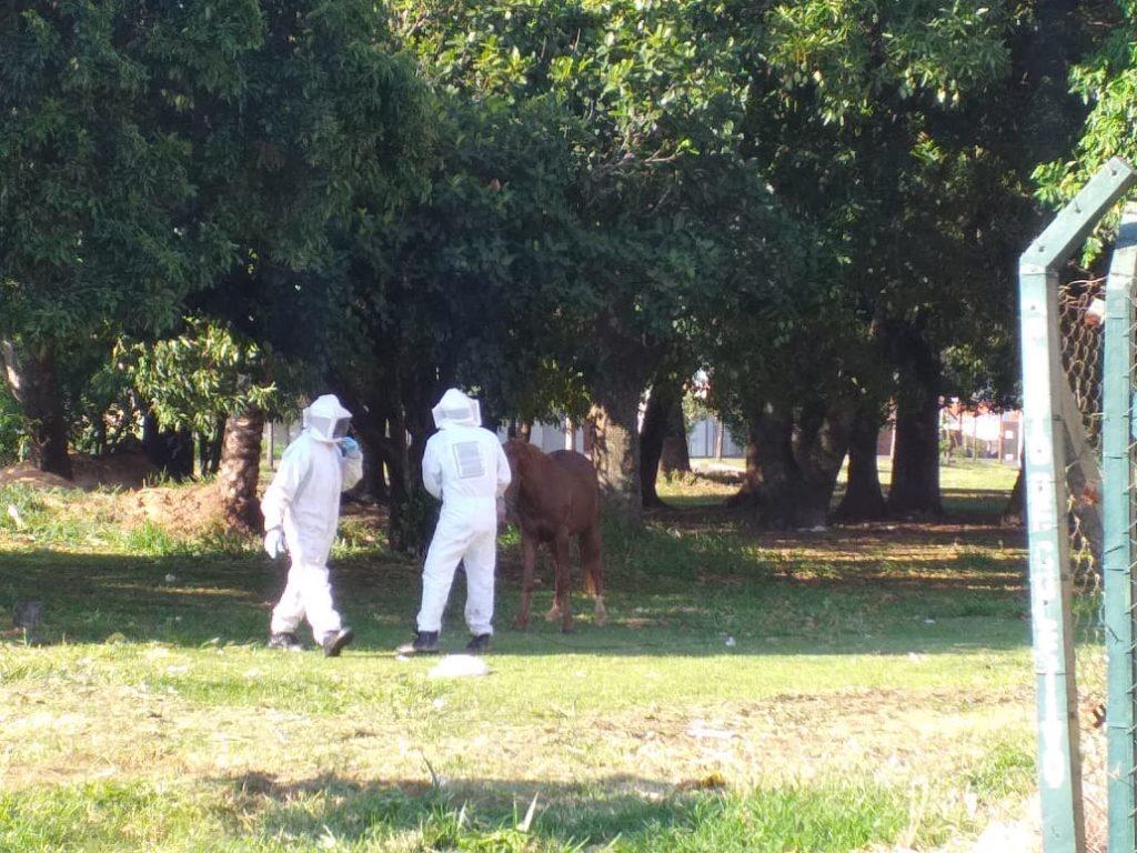 IMG 20191112 WA0000 1024x768 - MAUS TRATOS: Bombeiros resgatam cavalo amarrado atacado por abelhas