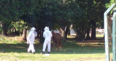 IMG 20191112 WA0000 390x205 - MAUS TRATOS: Bombeiros resgatam cavalo amarrado atacado por abelhas