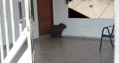 IMG 20191105 233700 390x205 - Animais selvagens invadem residências em Birigui